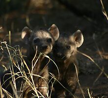 Spotted Hyaena Pups by 3phoria