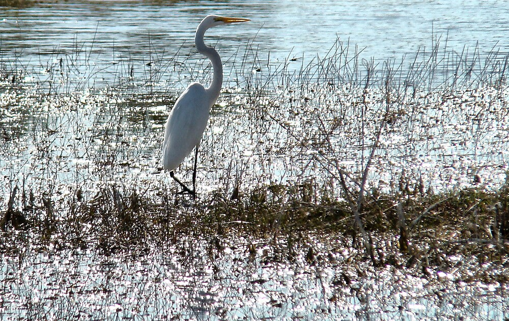 wetlands : Florida Everglades ..slow black death awaits  by Isa Rodriguez