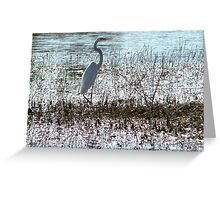 wetlands : Florida Everglades ..slow black death awaits  Greeting Card