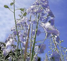 Blue Delphinium Flower Tower by beatrice11