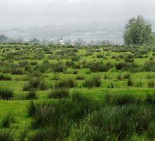 Meadow, Romania by Antanas