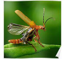 Bug! Poster