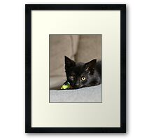 Playing with mice Framed Print
