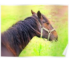 Chestnut Foal Poster
