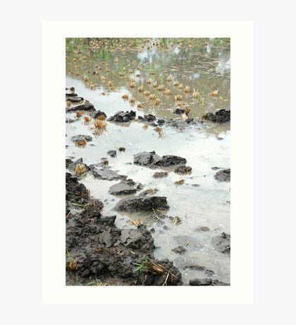 wet land Art Print