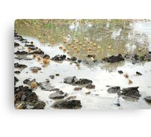 wet land Canvas Print