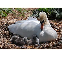 Mother and babies Photographic Print