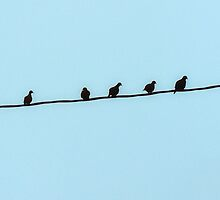 Birds on a wire by amygrennell