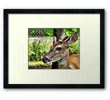 Velvet Antlers-2 Framed Print
