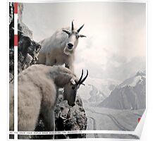 Mountain Goats photograph with text Poster