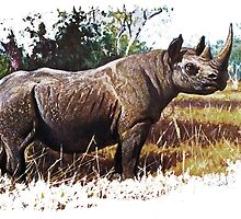 Black african rhino by marmur