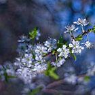 silence about the spring by Patrycja Makowska