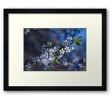 silence about the spring Framed Print