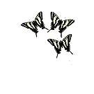 Papilio by garts
