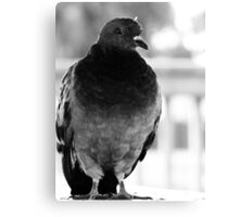 Bird 2 Canvas Print