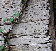 Cajun Vine by Christopher Heil