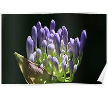 Purple flower 6045 Poster