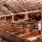 Apple Sorting Line by rjcolby