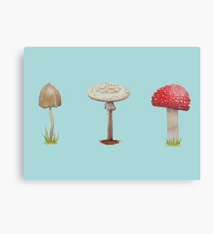 Many Mushrooms Canvas Print