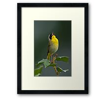 Common Yellowthroat Shouting Out Framed Print