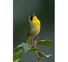 Common Yellowthroat Shouting Out Photographic Print