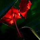 Bali's Red by Brian Bo Mei