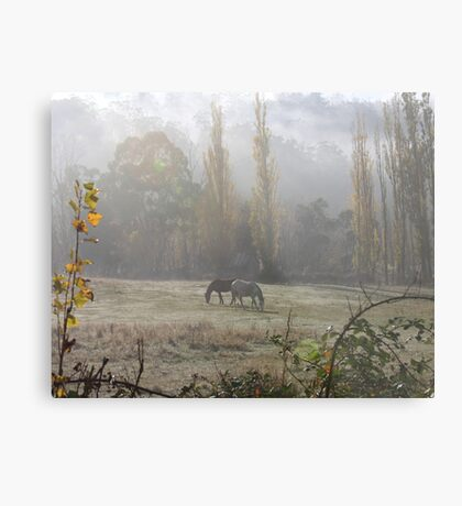 Equine Sublime Metal Print