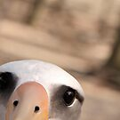 Curious Laysan Albatross by Gina Ruttle  (Whalegeek)