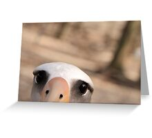 Curious Laysan Albatross Greeting Card