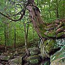 Balancing Cedar by Kasey Lilly