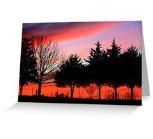 Cedars at Sunset Greeting Card