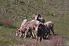 Herd of horns by zumi