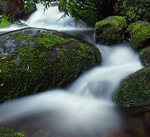 Creek Bends by Cindy Lever