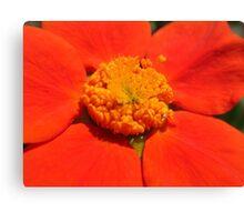 orange macro Canvas Print