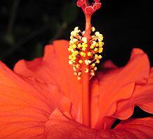 Orange Beauty by Maria Hernandez