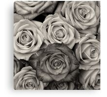 Shaded roses  Canvas Print