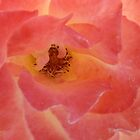 Just Peachy Pink by clizzio