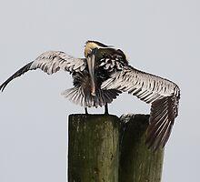 Pretty Pelican by Paulette1021