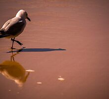 Seagull at sunrise by MitzPicz