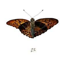 Nymphalidae Butterfly by Arthropodart