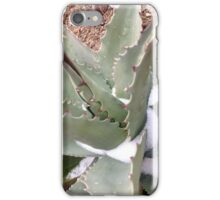 Century Plant and Snow iPhone Case/Skin