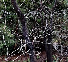 Whippy Branches by Lozzar Landscape