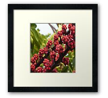 Bee in Red Framed Print