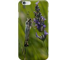 Scarce swallowtail butterfly iPhone Case/Skin