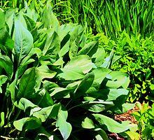 leafy greens by Rachel Williams