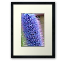 Blue Flower Spike Framed Print