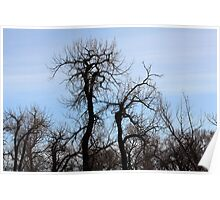 Tangled Trees Poster