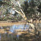 Wallam Creek River Gums by gillsart