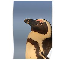 African Penguin Poster