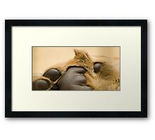 Lion's paw Framed Print